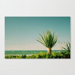 little palm Canvas Print