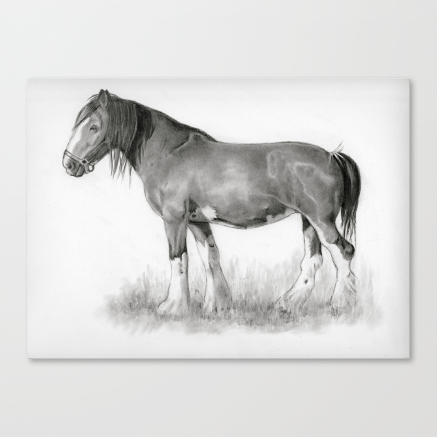 Draft Horse In Pencil Canvas Print By Joyart Society6