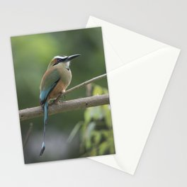 Turquoise-browed motmot perched in Costa Rican rainforest tree. Stationery Cards