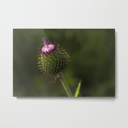 West Texas Thistle Metal Print