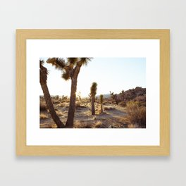 Joshua Tree, CA  / Dec 2013 Framed Art Print