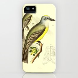 087 tyrannus couchii Tropical Kingbird Wrights Flycatcher or Grayish Flycatcher9 iPhone Case