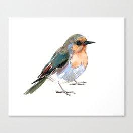 Robin bird children illustration design Canvas Print