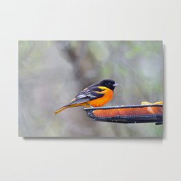 Oranges for the Oriole Metal Print