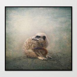 Study of a young Meerkat Canvas Print