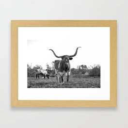 City Cattle Framed Art Print