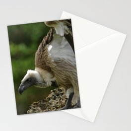 White-backed Vulture Stationery Cards