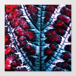 leaf structure abstract XVI Canvas Print