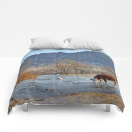 Cow drinking from a mountain stream from under ice in winter Comforters