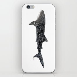 Whale shark Rhincodon typus iPhone Skin