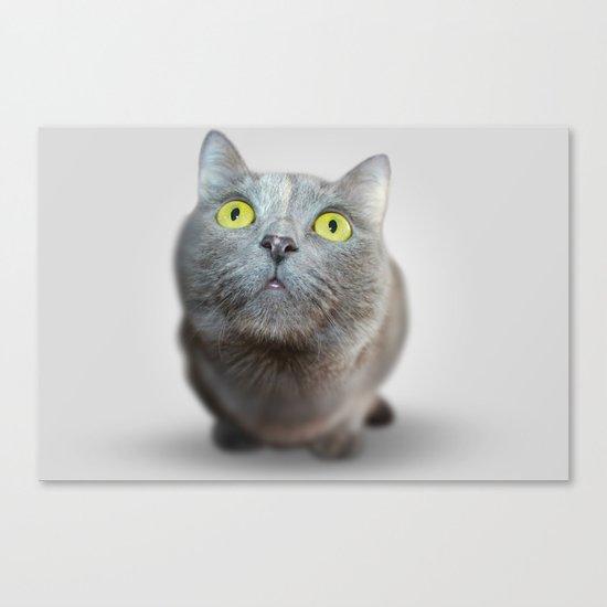 The Cat's Stare Canvas Print