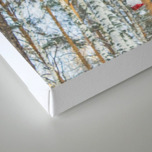 Winter Rowan and birchs Canvas Print