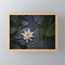 white water lily Framed Mini Art Print