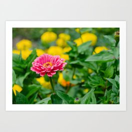 Pink flower, in green and yelow Art Print