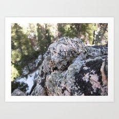 Crystalline Moss Art Print