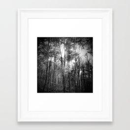 Sunlight, filtered Framed Art Print