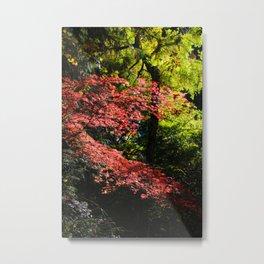 autumn in the light Metal Print