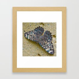 Turquoise and Sand Butterfly by Teresa Thompson Framed Art Print