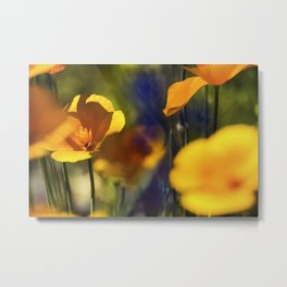 Arizona Yellow Poppies Metal Print