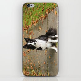 Sparkles the Border Collie iPhone Skin