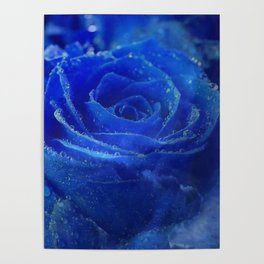 Blue Rose and Sky Poster