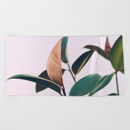Ficus Elastica #4 Beach Towel