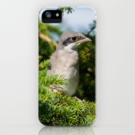 Fledgling Loggerhead Shrike iPhone Case