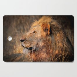 Lion in the evening light, South Africa Cutting Board