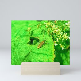 Golden Bloomed Grey Longhorn Beetle Mini Art Print