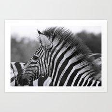Young Punk, Africa wildlife Art Print