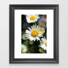 Darling Daises Framed Art Print