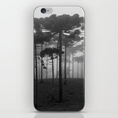 Araucaria Angustifolia iPhone & iPod Skin