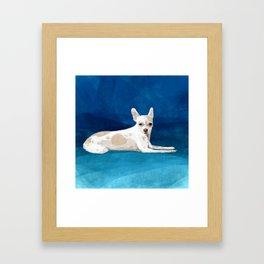 The Chihuahua Framed Art Print