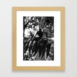 Black and White Tucano bird - Brazil Framed Art Print