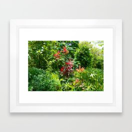 Hawaii Foliage 1 Framed Art Print