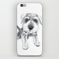 schnauzer iPhone & iPod Skins featuring Schnozz the Schnauzer by Beth Thompson