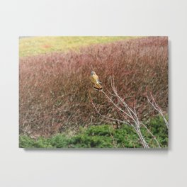 Sparrowhawk (Kestrel) 3 Metal Print