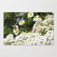 Small Happiness  Canvas Print