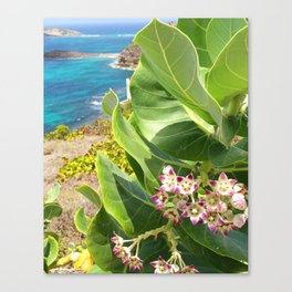 St. Barts succulents Canvas Print