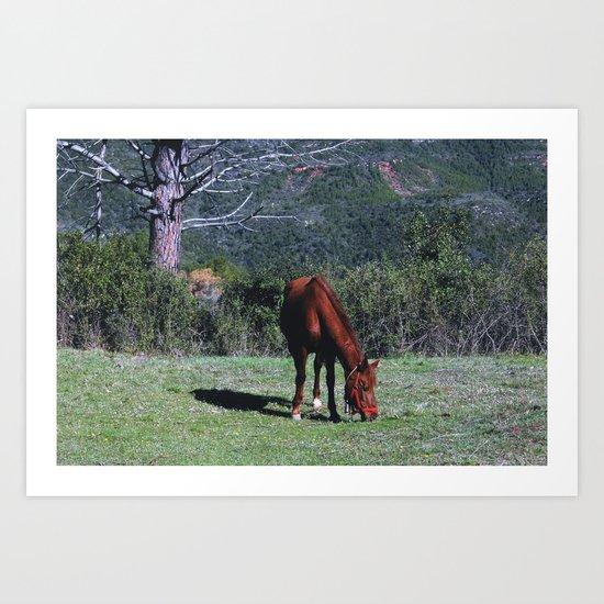 Horses [IV] Art Print