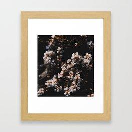 Wildflower Series - Hartz Peak Framed Art Print