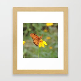 Ms. Indian Fritillary at West Lake Framed Art Print