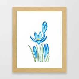 blue botanical crocus flowers watercolor Framed Art Print