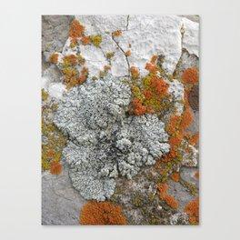Untitled 5. Canvas Print