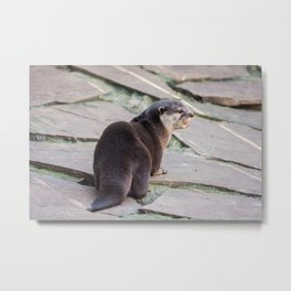 Living Treasures Animal Park - Otter Metal Print