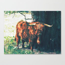 Ermintrude | Musical Crime Productions | Highland Photography | Highland Cow Canvas Print