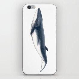 Bryde´s baby whale (Balaenoptera brydei) iPhone Skin