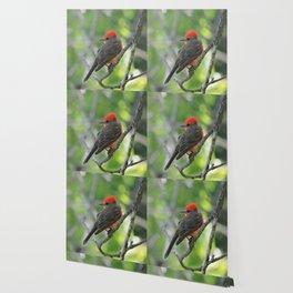 Vermilion Flycatcher Wallpaper