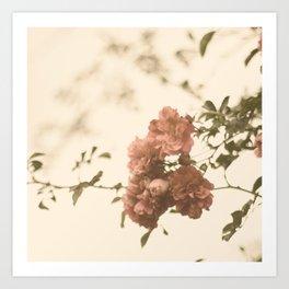 Lingering Roses Art Print