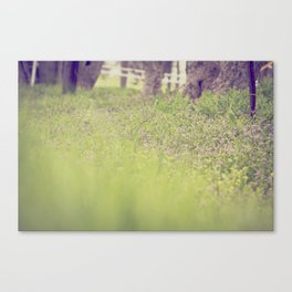 I love you SPRING ! Canvas Print